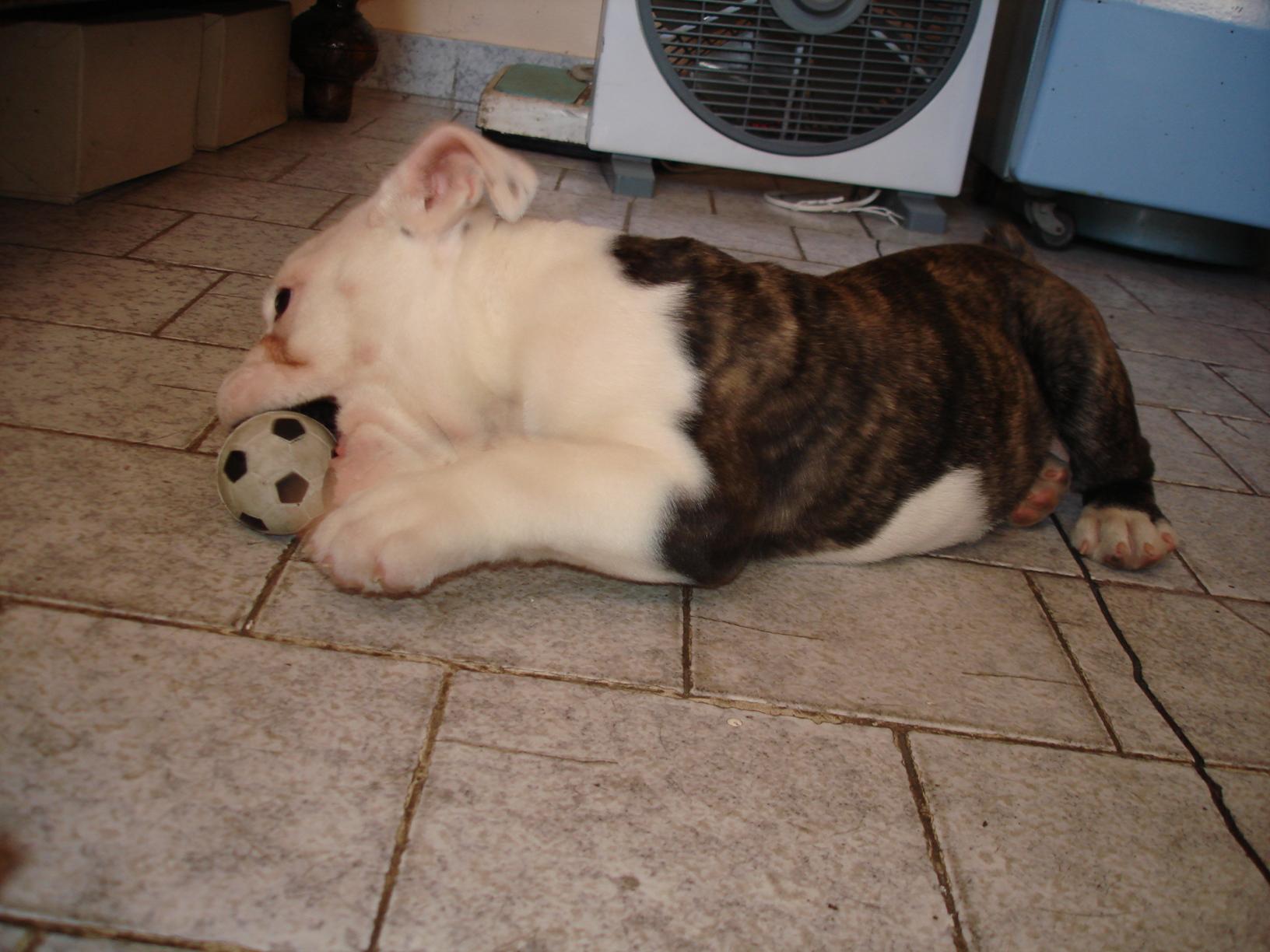 cachorro DSC03909