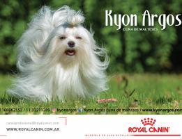 Kyon Argos