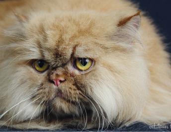 Formas amigables para medicar a nuestros gatos