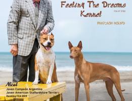 FEELING THE DREAMS KENNEL