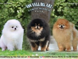 Von Vall del Art