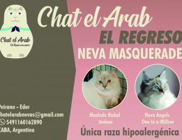Chat el Arab