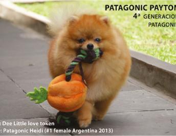 Pasión por los Pomeranias