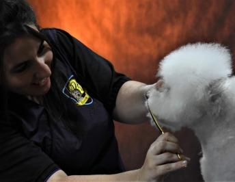 La peluquería canina: calidad vs cantidad  ¿Tijera o máquina?