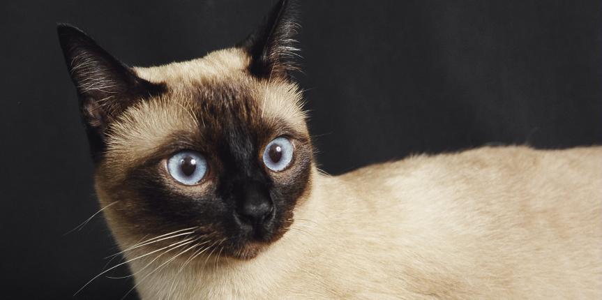 Descubrimiento de una enfermedad felina no descripta en el país (Una historia de película)