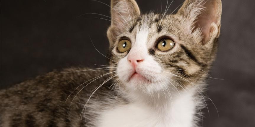 ¿Cómo llevar a nuestro gato al veterinario?