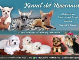 Kennel del Ruizenard