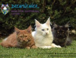 Dreamweaver