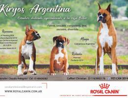Kiryos Argentina