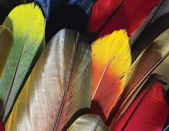 Los colores de las aves